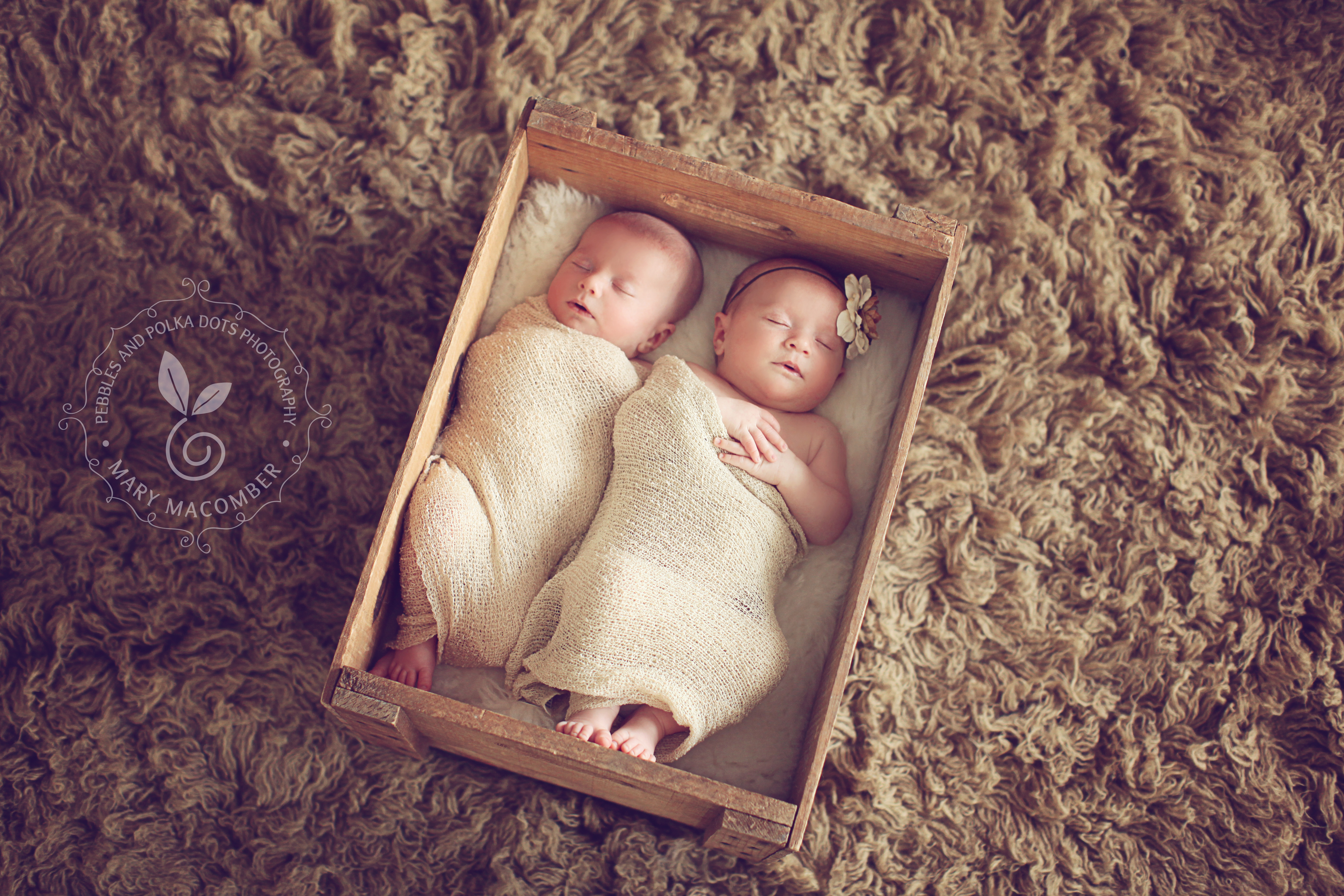 6 week old twins leo and lola worcester ma newborn photographer