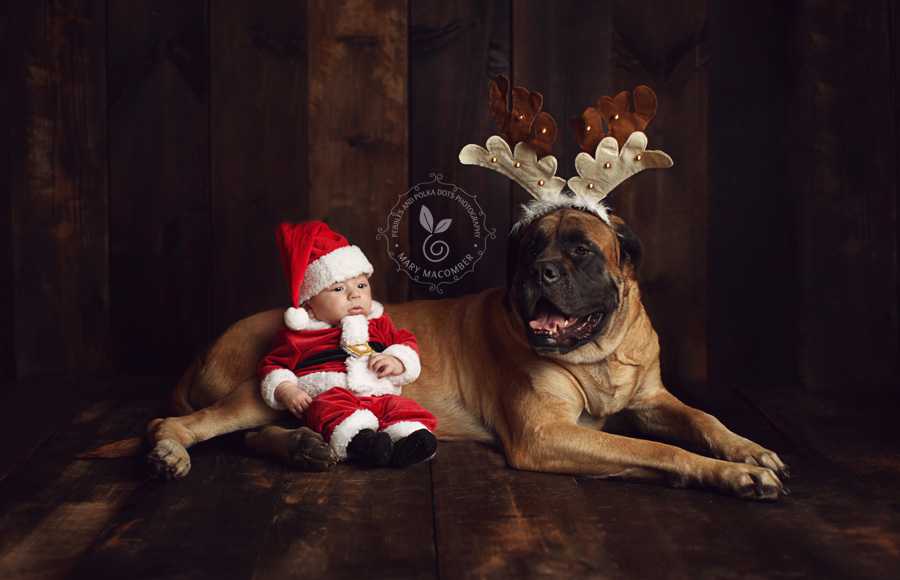 christmas card ideas with dog and baby chrismast cards ideas - Dog Christmas Card Ideas